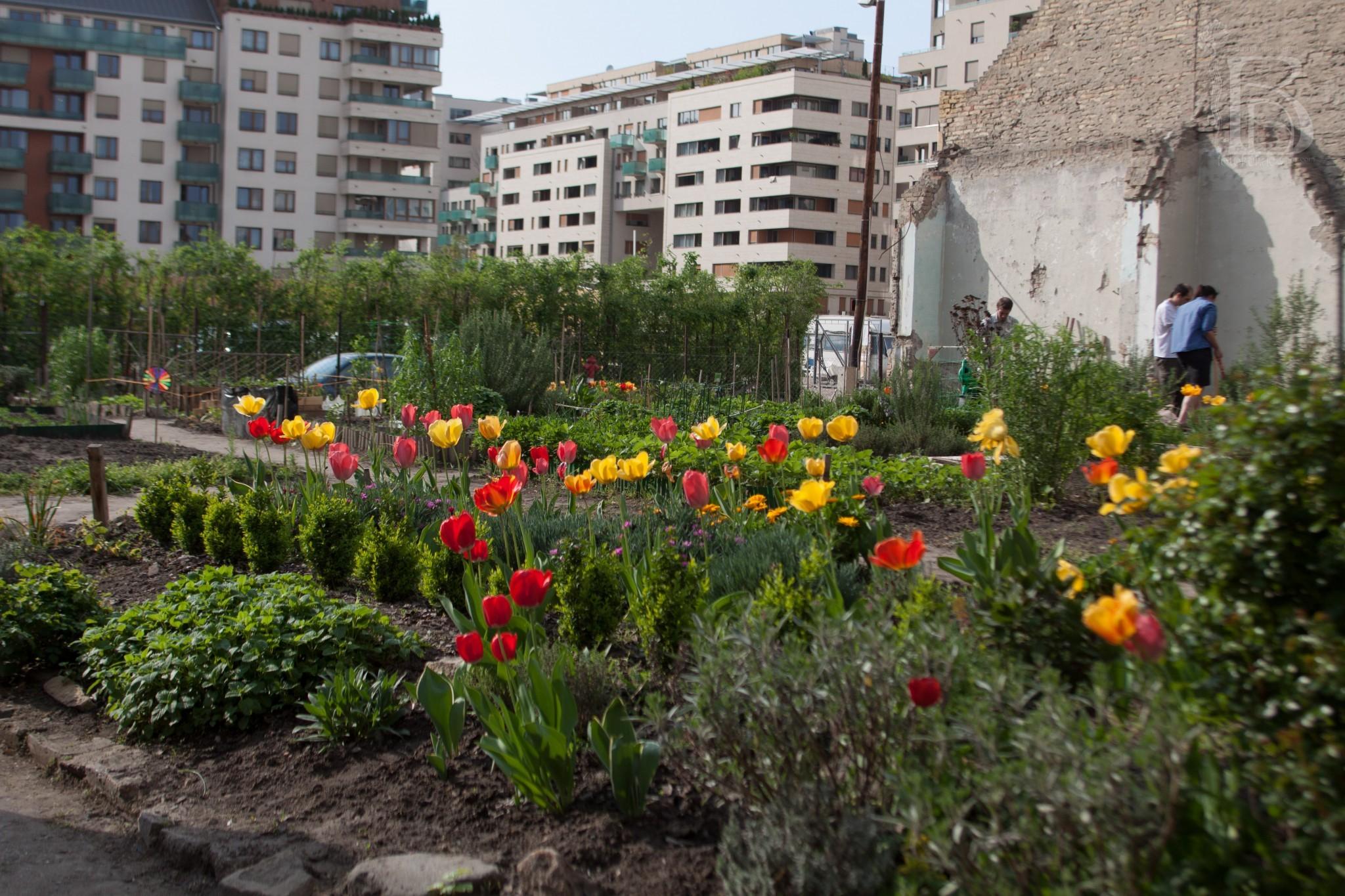 Kert a városban – közösségi élmény és saját zöldség