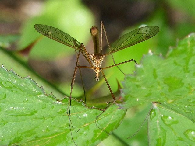 mosquito-1384020_640